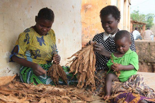 Naiset työssä Malawissa.